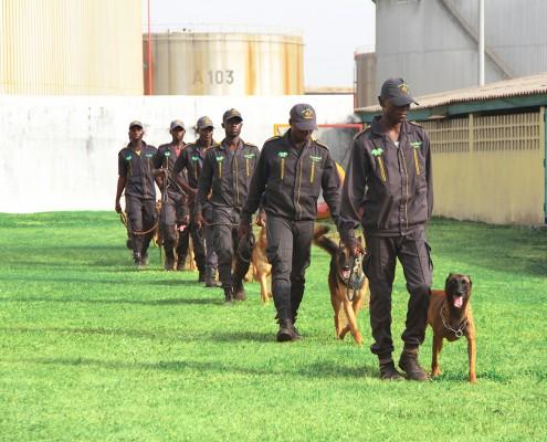 brigade cynophile, société de sécurité, vigassistance